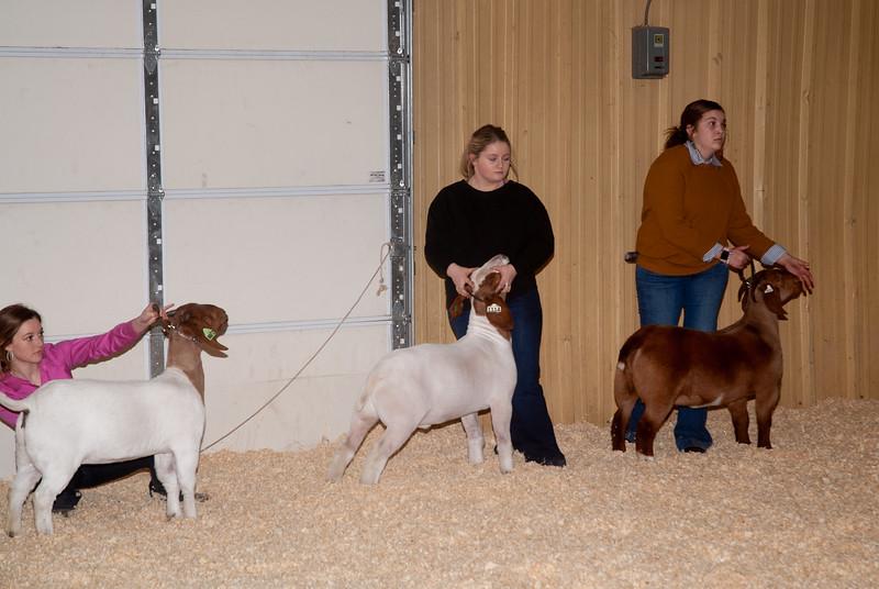 2019_newcastle_sheep&goats-13