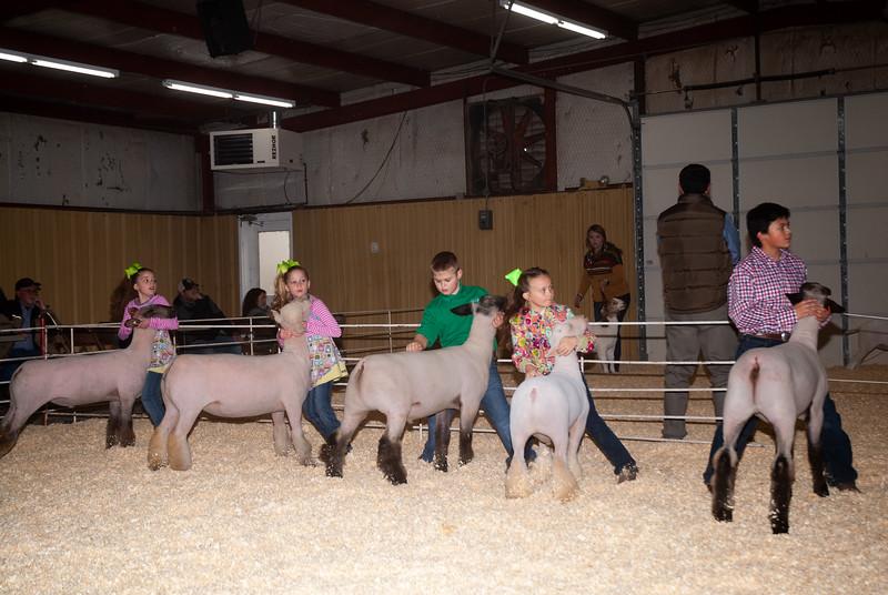 2019_newcastle_sheep&goats-10