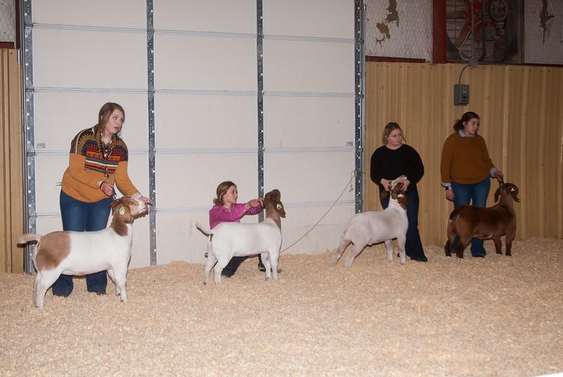 2019_newcastle_sheep&goats-12