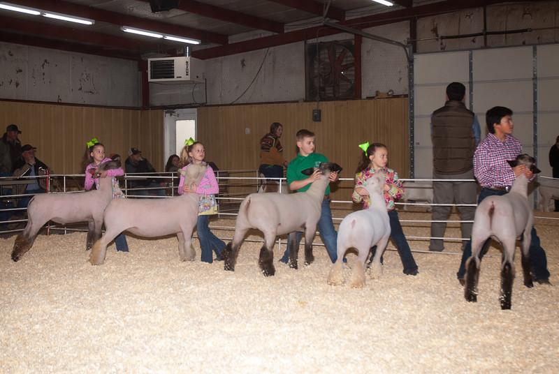 2019_newcastle_sheep&goats-9