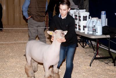 2019_newcastle_sheep&goats-20