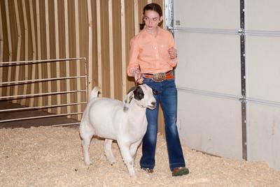 2019_newcastle_sheep&goats-15