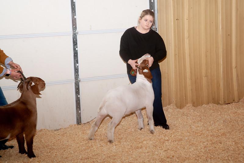 2019_newcastle_sheep&goats-2