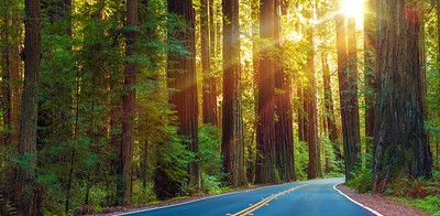 Famous Redwood Highway