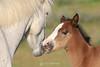 Wild mare and foal, Arizona