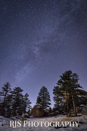 Ponderosa Pines at Night-2