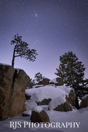 Ponderosa Pines at Night-3