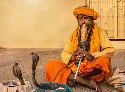 Snake charmer with two king cobra snakes