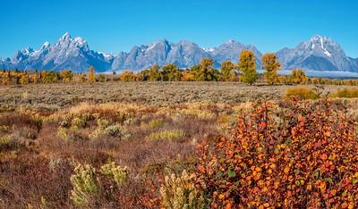 Spectacular autumn in Wyoming.