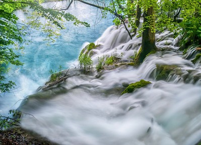 Water rushing past trees and plants at the top of a waterfall.