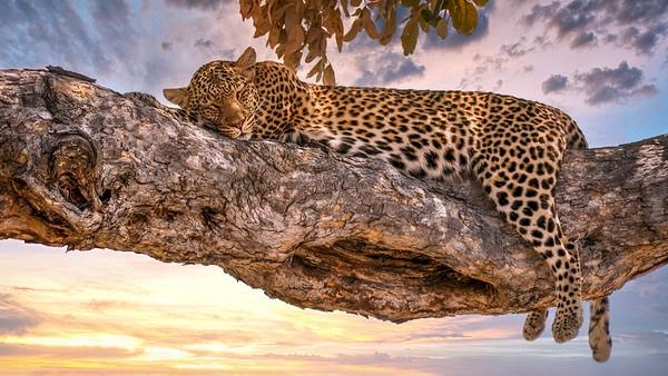 Savute Reserve, Botswana