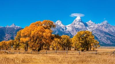 Fall foliage and the Grand Teton mountains.