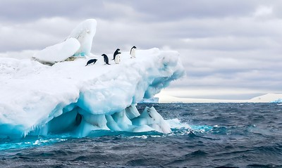 Adelie penguins on an iceberg in Antarctica