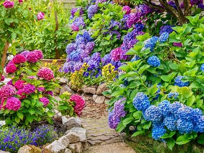 Summer hydrangea garden.