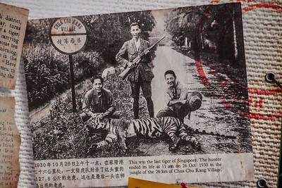 A newspaper clipping from 1930, when the last tiger of Singapore was killed.