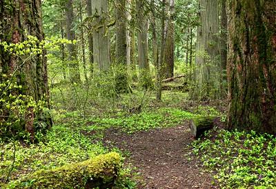 Spring Forest 05.17.2020