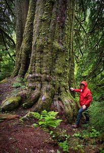 Old Tree 06.07.2020