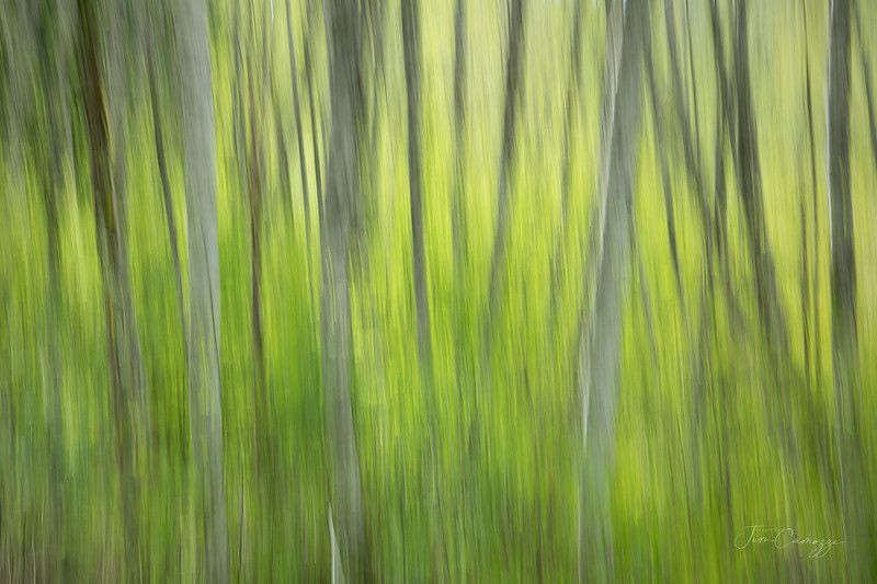 Abstract Forest 05.09.2021