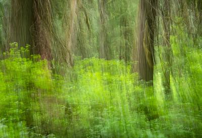 Forest Spring Art 06.06.2021