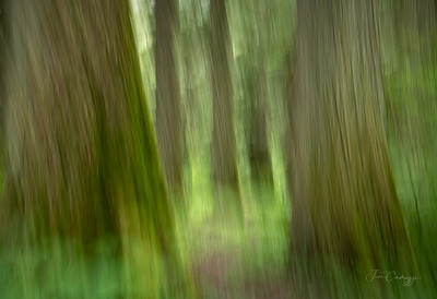 Cedar Art 06.06.2021