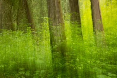 Forest Art 06.06.2021