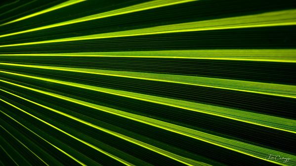 Palm Leaf 03.08.2020 Redo