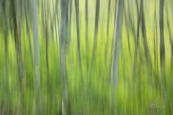 Through the Trees 05.09.2021