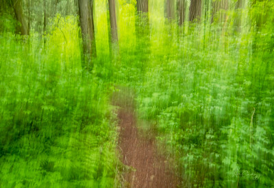 Forest Path of Art 06.06.2021