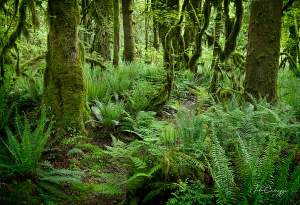 Forest Path 05242020
