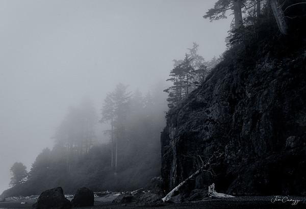 Foggy Shoreline 03.08.2020