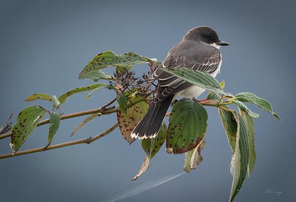 09.23.2020  Bird Branch