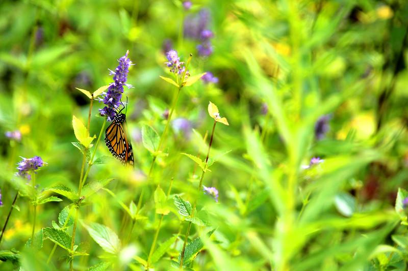 "Newest Light, Riverside: Iggy, 14 - ""Butterfly"""