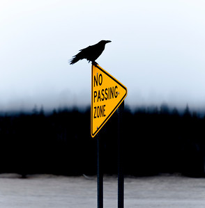 Corvus Crossing