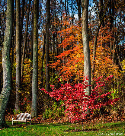 Late fall colors and bench