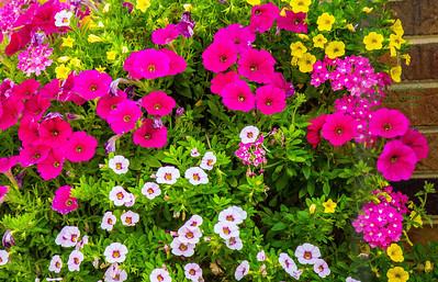 flower grouping-9765