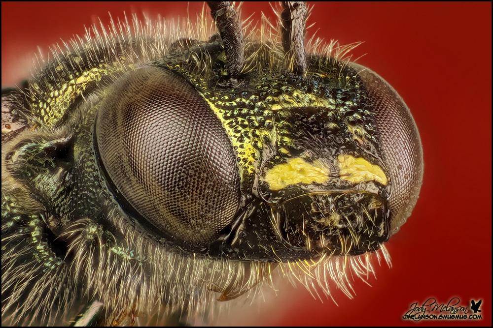 Wasp 53