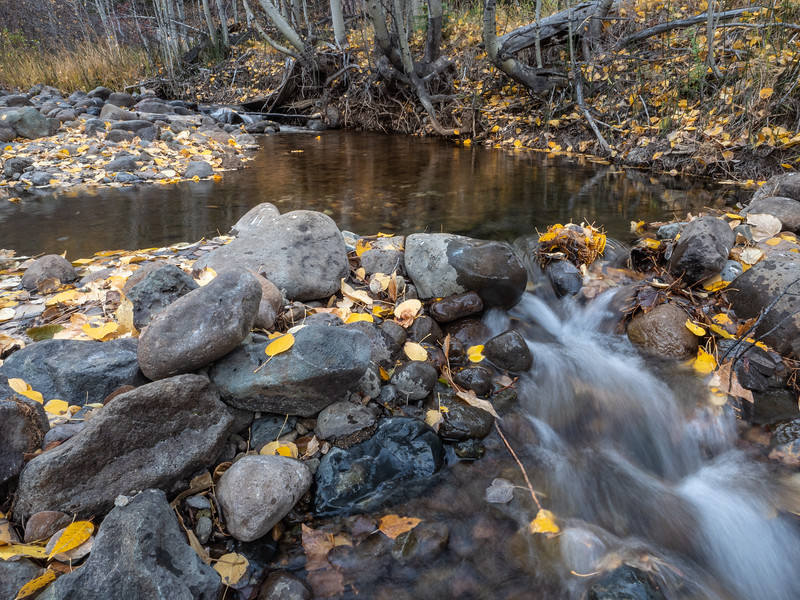 Autumn Decay, Cold Stream Creek