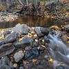 Autumn Decay, Cold Stream Creek