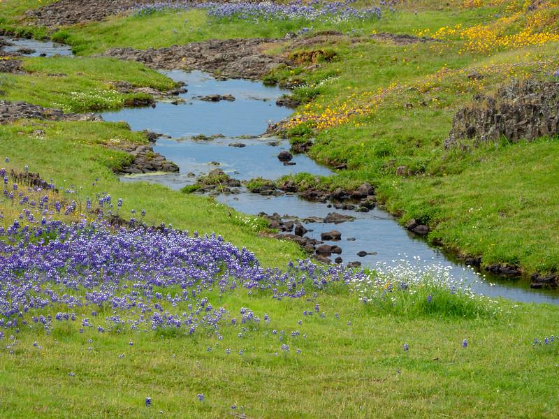 Mixed Bunches of Wildflowers Surrounding Seasonal Creek