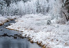 Fresh Snow Scene