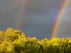 Double Rainbow near the Rogue River