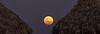 Full Moon Rising Between Grass Huts, 6:20pm, Feb 19, 2019