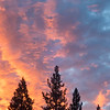 Colorful Sunset and Pine Trees