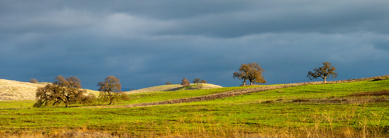 Rolling Oak Landscape and Brooding Sky
