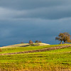 Rolling Oak Landscape and Brooding Sky