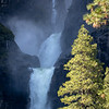 Mid-Section of Yosemite Falls Flanked by Pine Trees