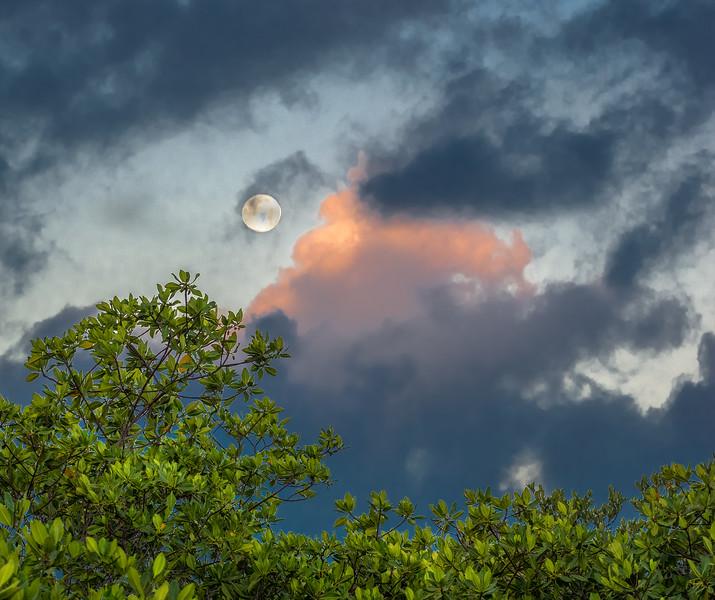 Moon Setting over Mangroves as Sun Rises in the Opposite Sky, 6:21am, Feb 20 2019