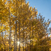 Sunstar and Autumn Aspens