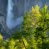 L-Shaped Mid-Section of Yosemite Falls and Spring Foliage
