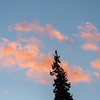 Abstract of Rosy Clouds and Tip of Pine Tree